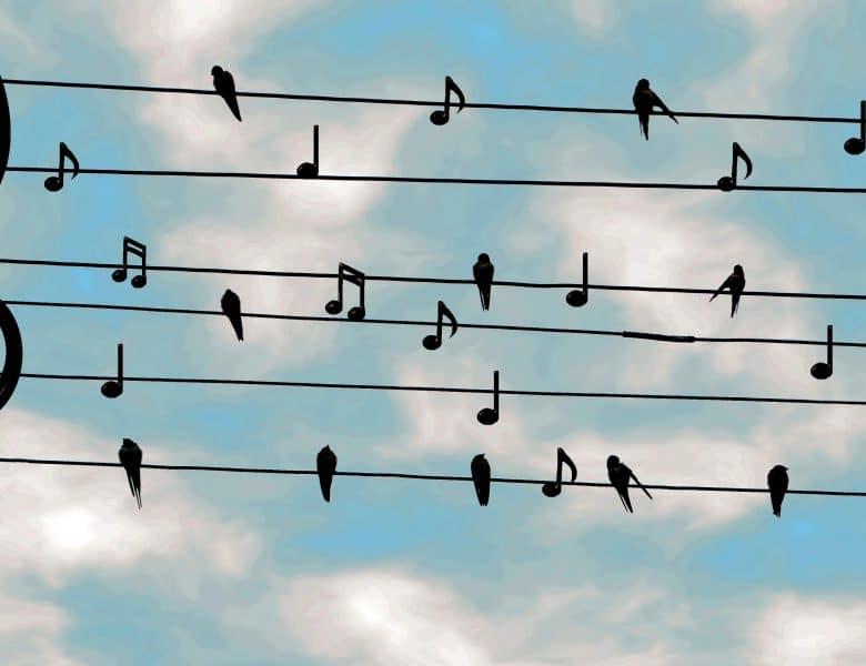 Şarkı İndir Siteleri Ne Tarz Faaliyetler Gösteriyor?