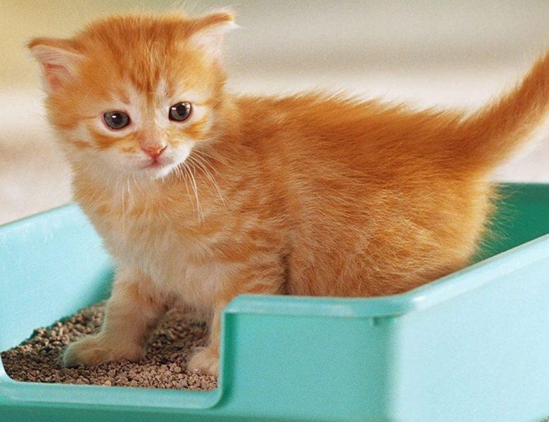 Kaliteli Kedi Kumu Markaları